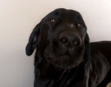 Rescued Dog Loves His Favorite Childhood Song Video Dog Love