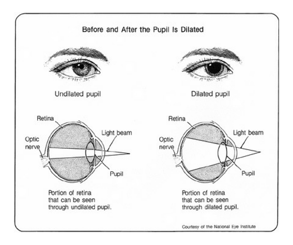 Pin by Tasmanian Eye Clinics on Tasmanian Eye Clinics