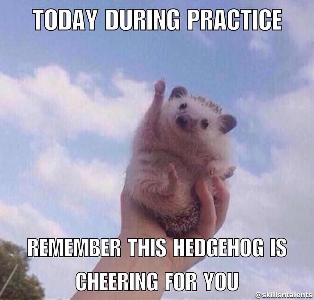 Omg I Know That Hedgehog I M Subscribed To Her Owner On Youtube Sadly She Passes Away The Hedgehog Funny Animal Pictures Animals Cute Animals