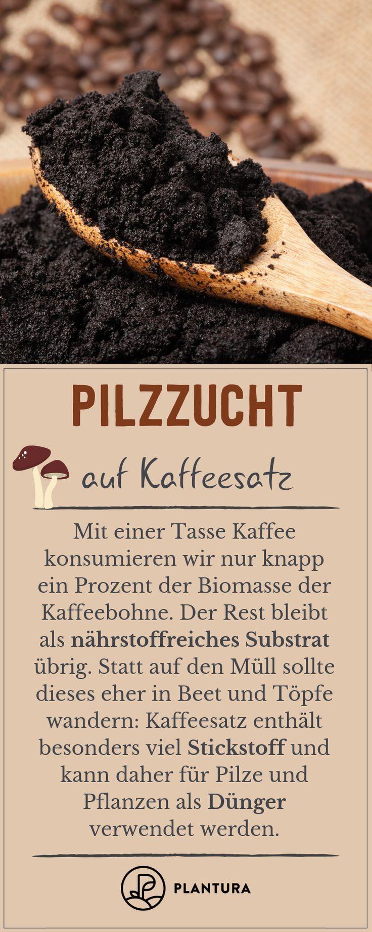 Pilzzucht auf Kaffeesatz: Speisepilze aus der eigenen Küche - Plantura