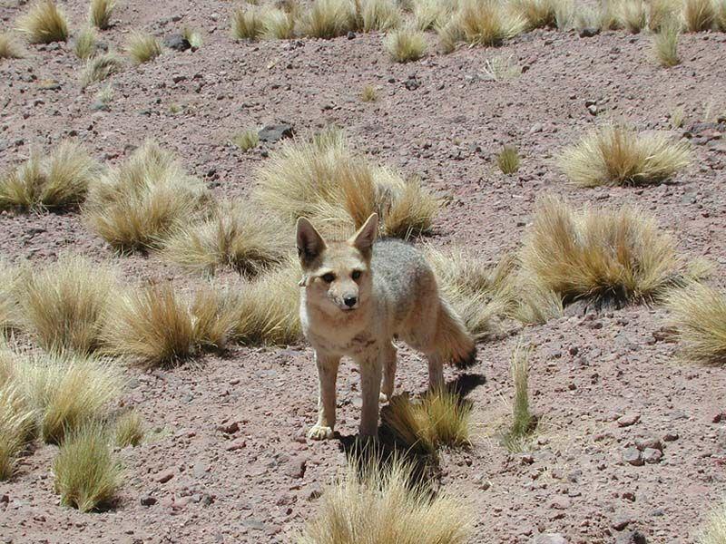 Related image Desert animals and plants, Desert biome