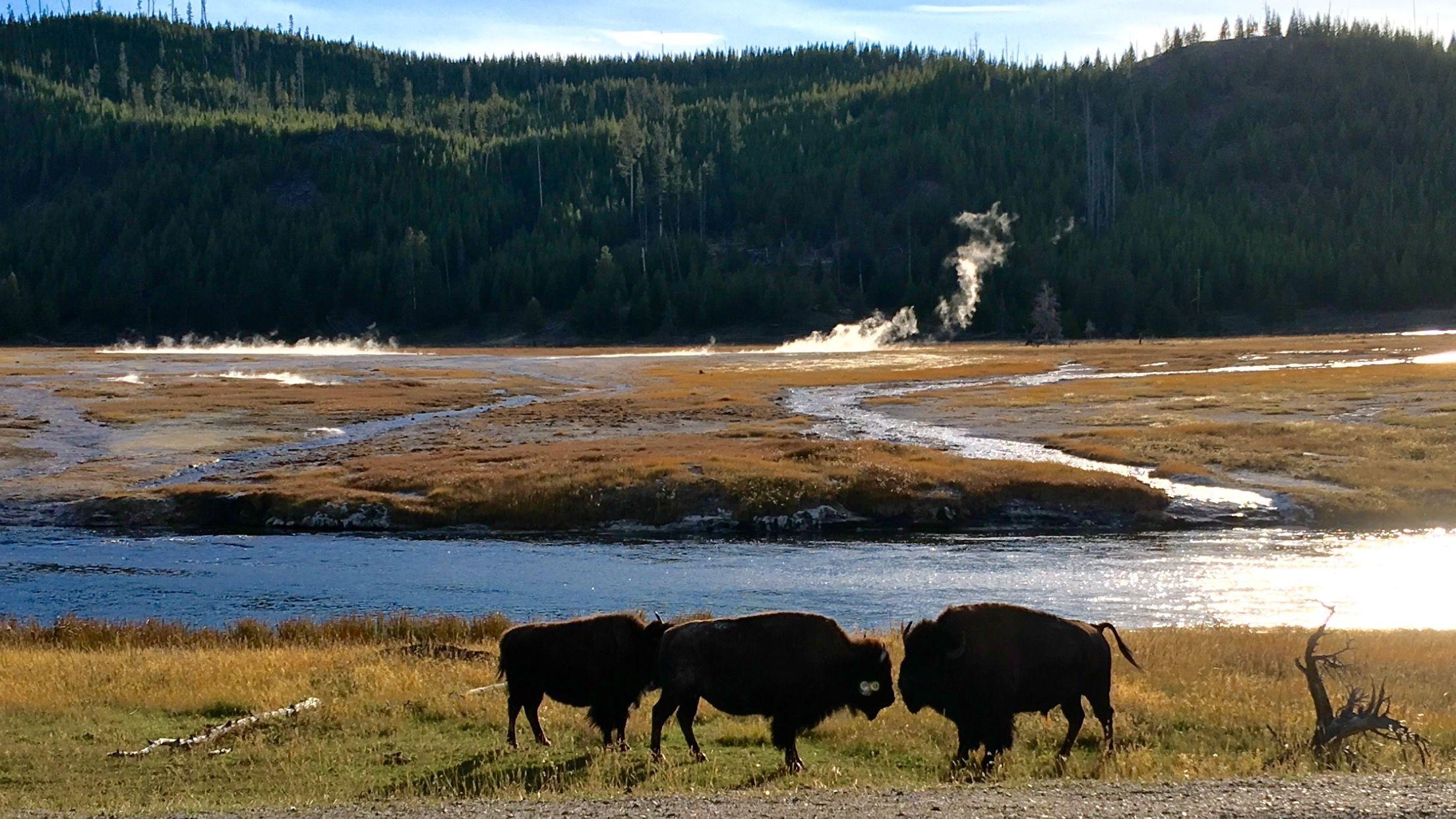 Yellowstone Montana Near Cooke City Yellowstone National
