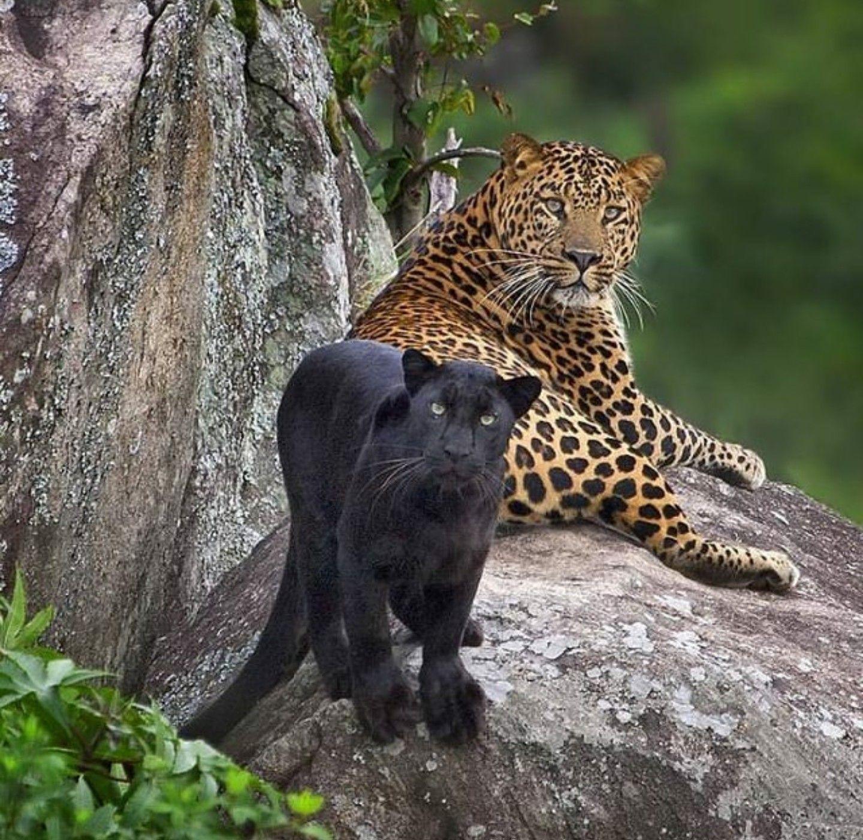 Animals Beautiful, Big Cats, Animals