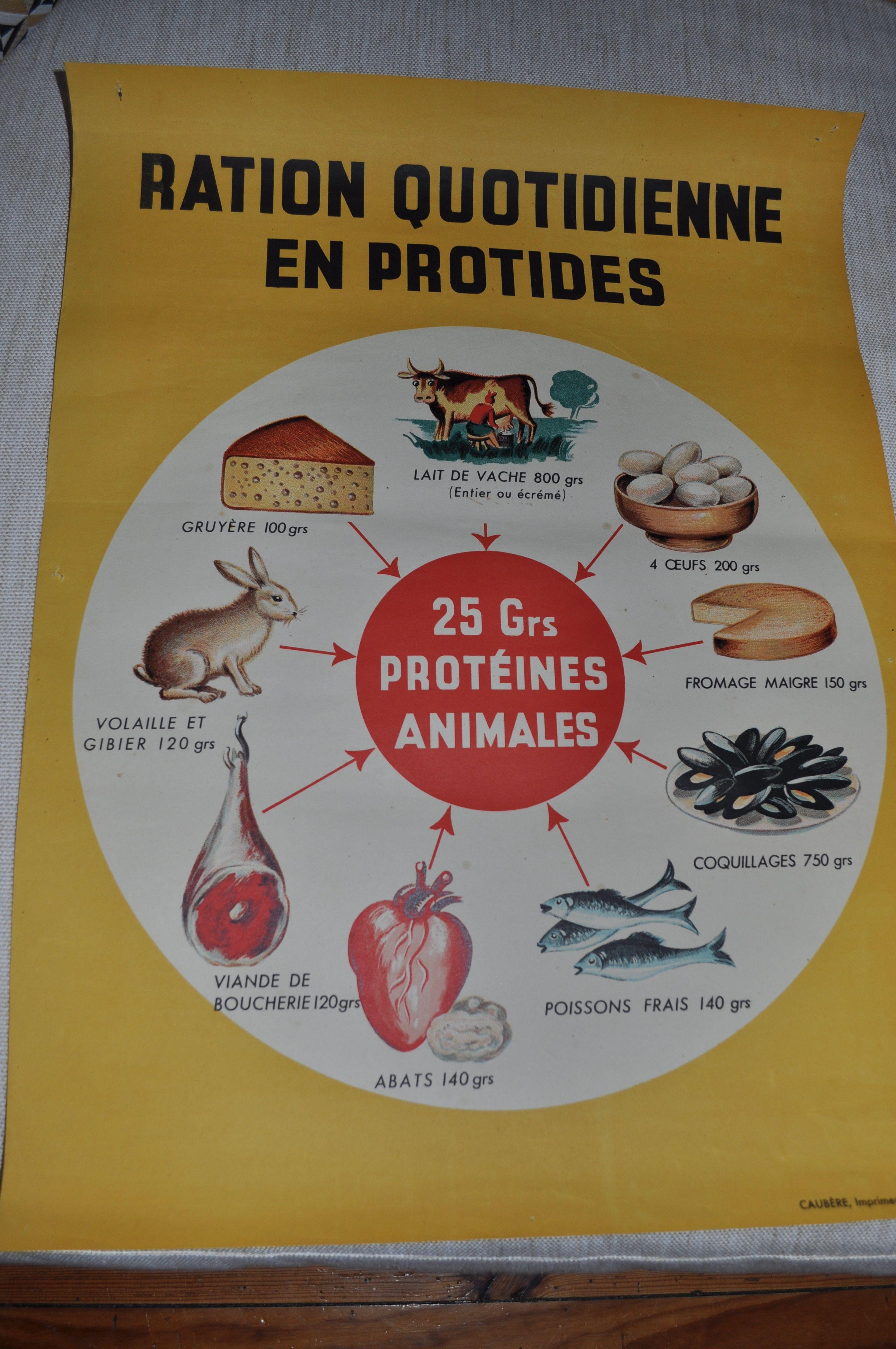"""Affiche pedagogique """"la ration quoti nne en protides"""""""