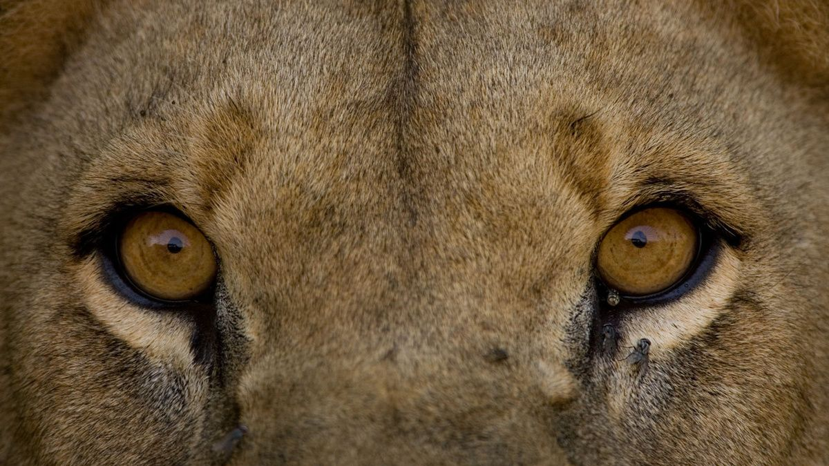 Portals of wild animals: a selection of sites