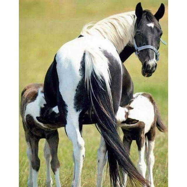Hey! can't a gal get a little privacy? [GM Images] #Horses #Saddles #MySaddleTrader