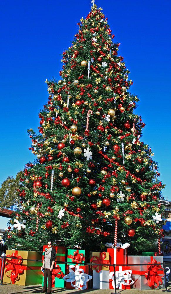 Christmas Gifts For Senior Travellers Christmas In America Christmas Tree Outside Christmas Worldwide