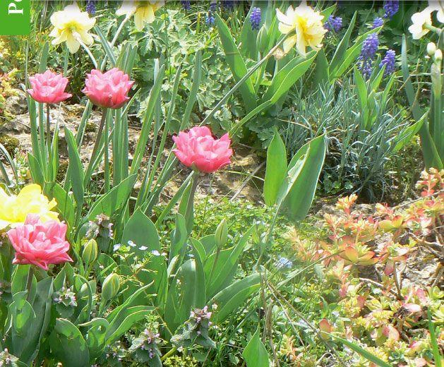 Magazine Petit Jardin N°67 - Mars 2012 - Jardinage, plantes et fleurs   Jardinage, Petit jardin ...