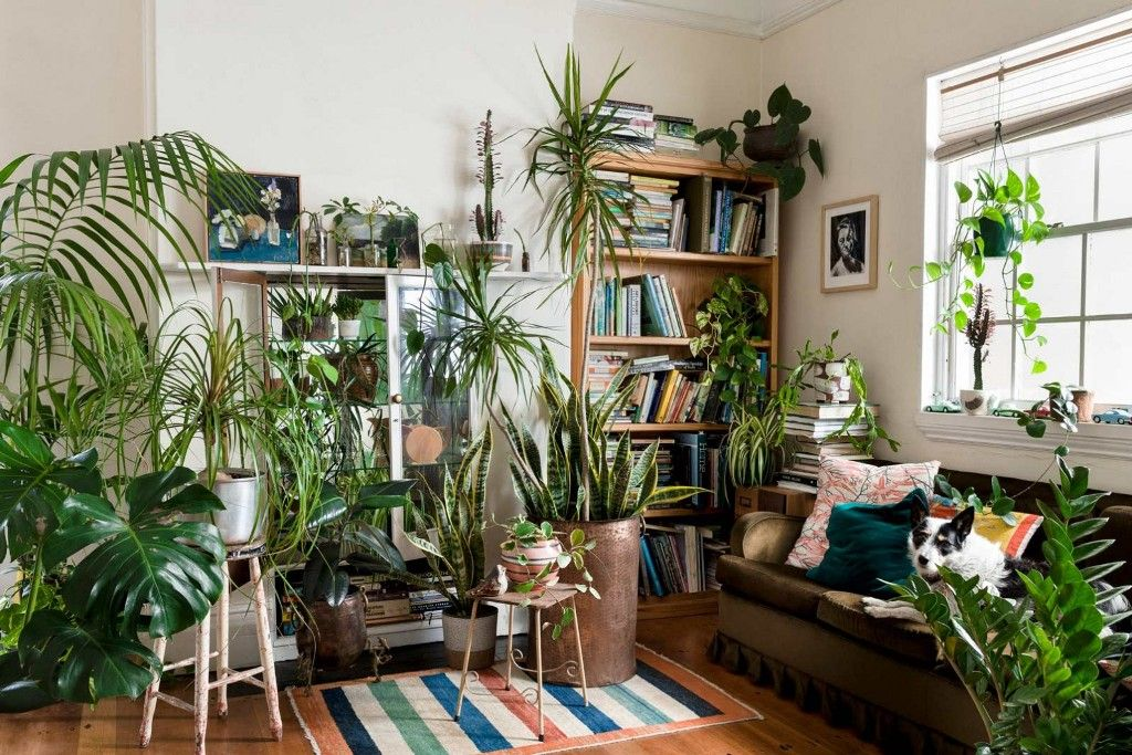 10 Ausgezeichnete Ideen Um Zimmerpflanzen Im Innenbereich Anzuzeigen Living Room Plants Room With Plants Indoor Plants