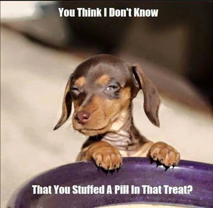We Do This To My Dog When He Is Sick He Won T Eat His Medicine
