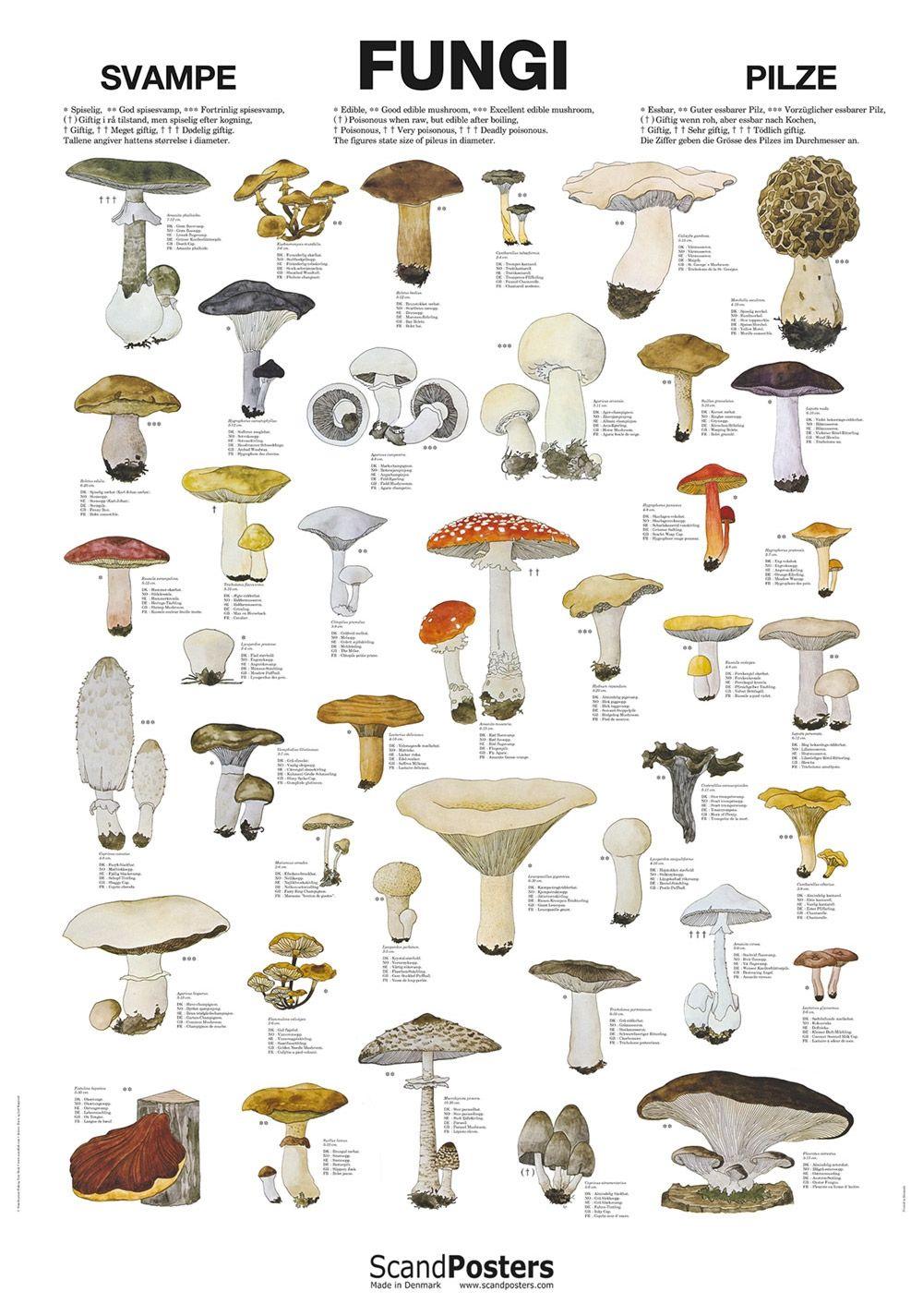 Fungi Chart Edible Poisonous Etc Stuffed Mushrooms Survival Food Survival Skills