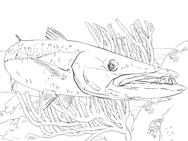 Barracuda Fish Between Reefs Coloring Pages Best Place To Color Coloring Pages Fish Coloring Page Fish Art