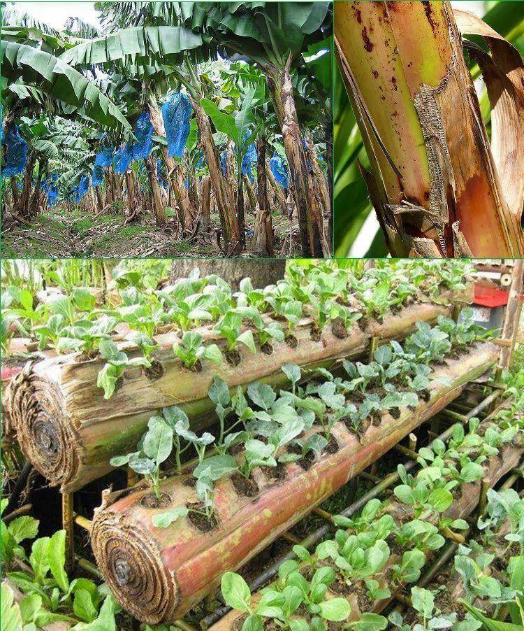 Lahan Kebun Singkong