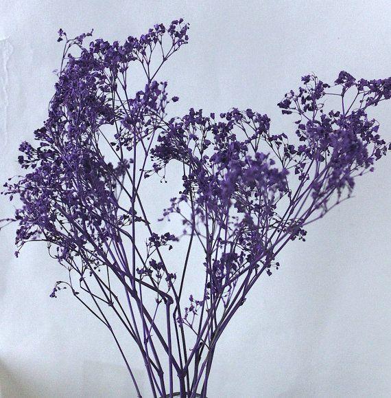 Purple Babies Breath Dried Painted Purple Gypsophila by BBrustic