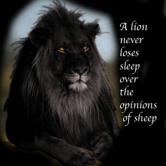 Black Lion | Beautiful Animals | Lion, The lion sleeps