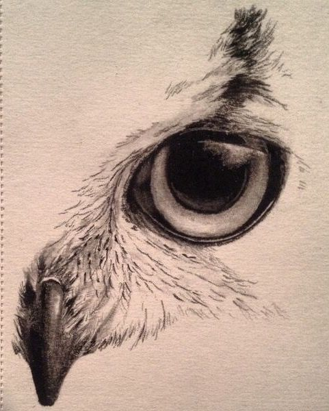 Eagle Eye Drawings In 2019 Pinterest Art Owl Sketch And Art
