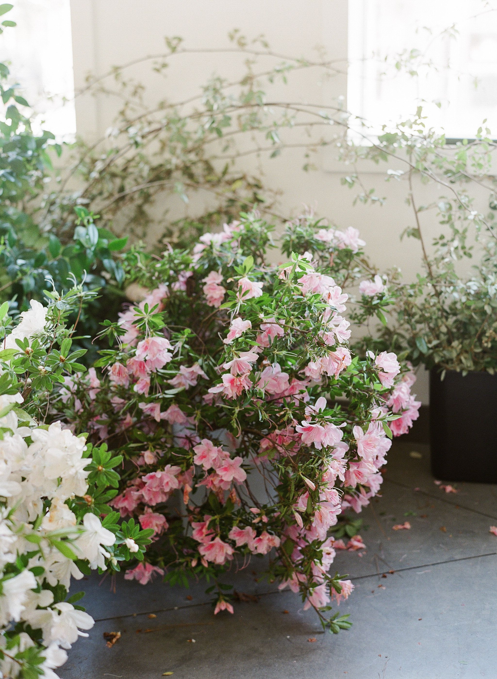 Foraged Azalea Blooms in Charleston for the Ariella Chezar