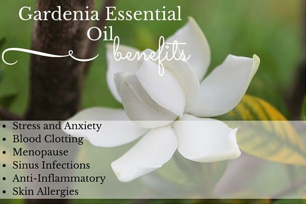 Gardenia Essential Oil Health Benefits Listed