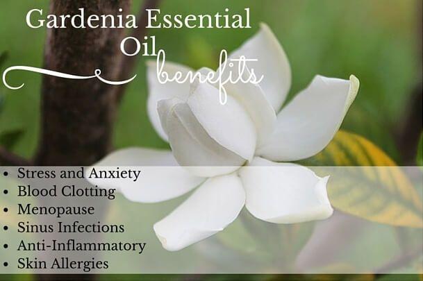 Gardenia Essential Oil Benefits Gardenia Essential Oil
