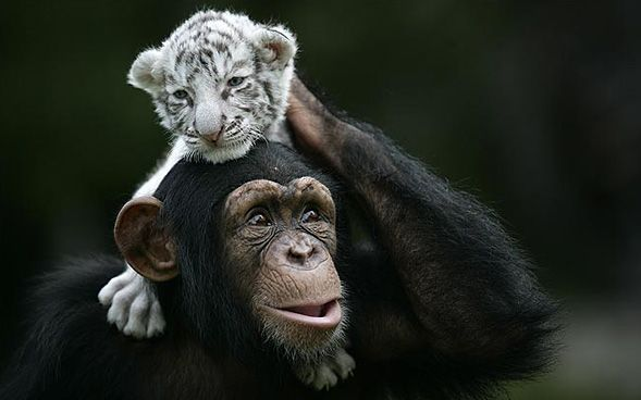 I luv it when animals that r different can get along.