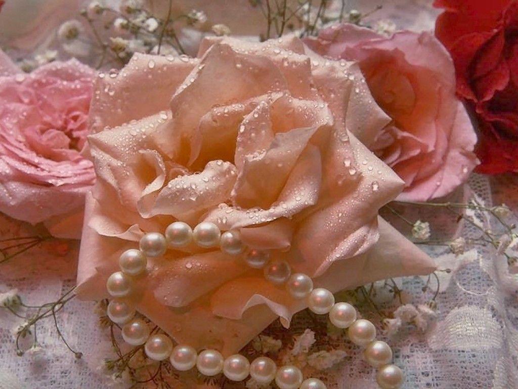 Для оформление, открытки роза и жемчуг