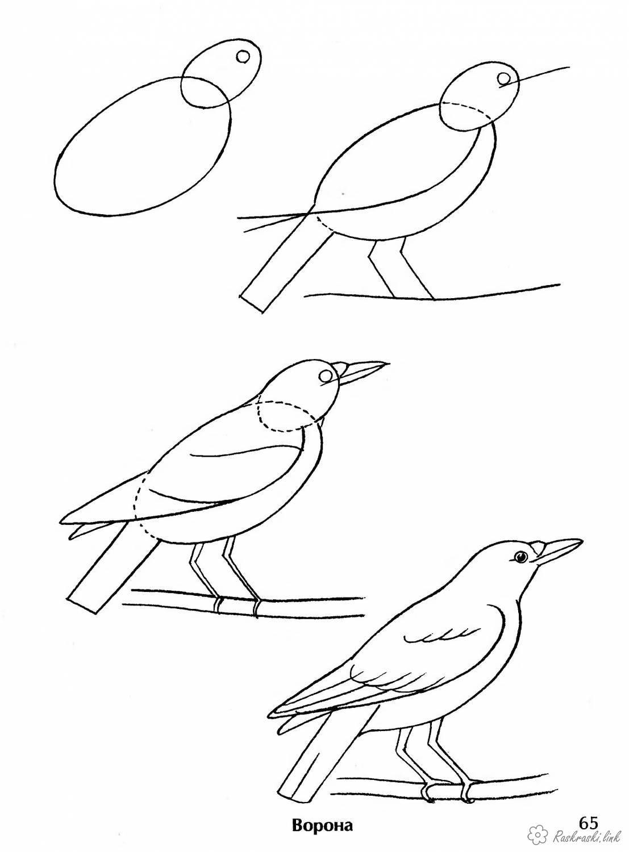Raskraski Kak Narisovat Vorona Poetapno V 2020 G Narisovat Pticu Risovat Raskraski