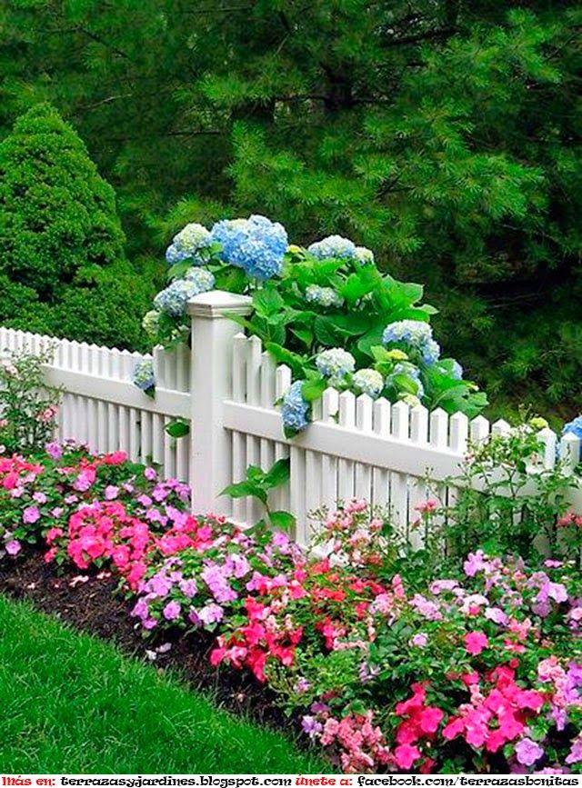 Pin En Flores Azaleia