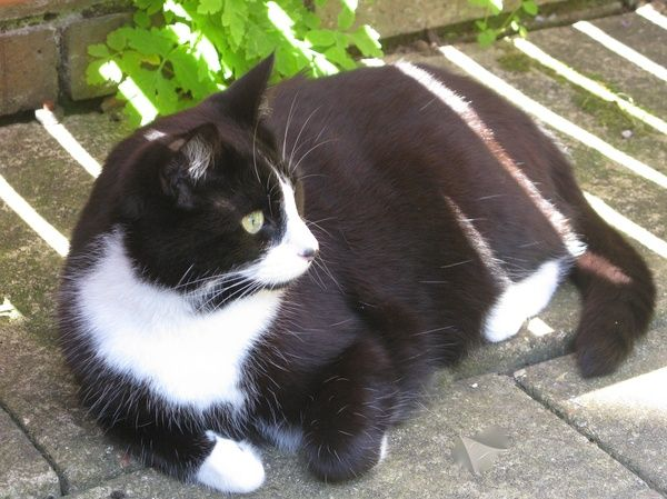 Housesitting assignment in Godalming, United Kingdom Pet
