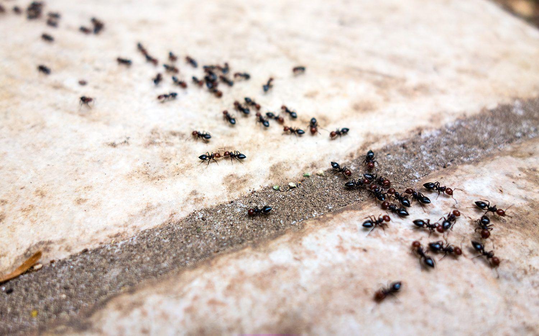 Pin Auf Ant Remedies