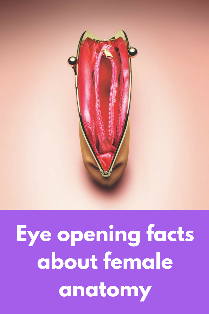 Eye opening facts about female anatomy   Female reproductive system ...