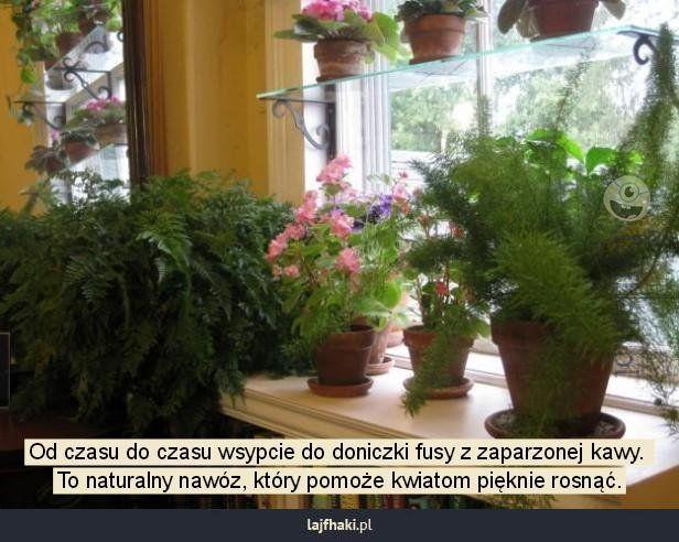 Fusy Z Kawy Do Domowych Kwiatow I Ogrodu Jak Nawozic Kwiaty Fusami