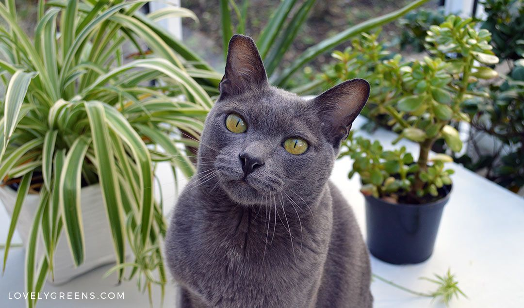 5 Trendy Houseplants that are Toxic to Cats Toxic plants
