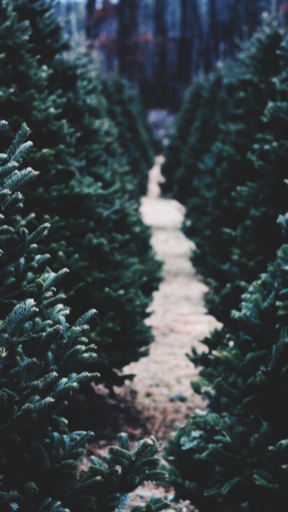 winter wallpapers | Tumblr | Backgrounds For iPhone ...