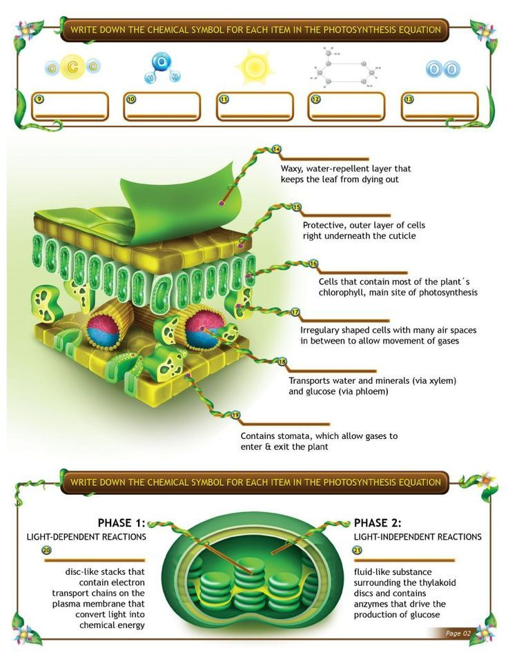 Engage your students with an interactive photosynthesis ...