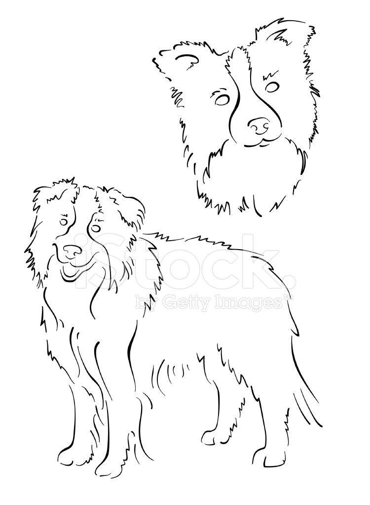 Border Collie Design Set Dog Drawing Simple Border Collie Art Dog Drawing