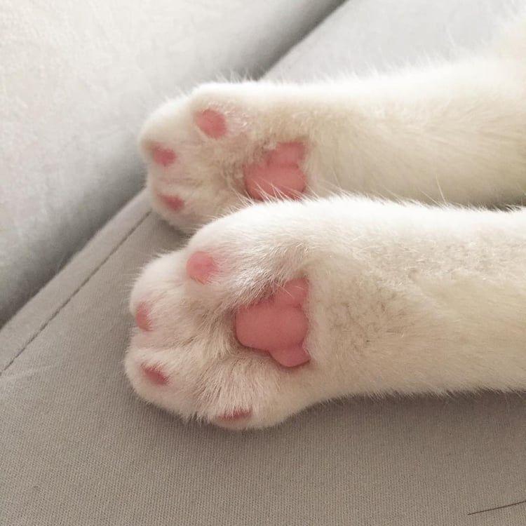 Image about cute in Kitties �💗 by Joonie🌸 on We Heart It