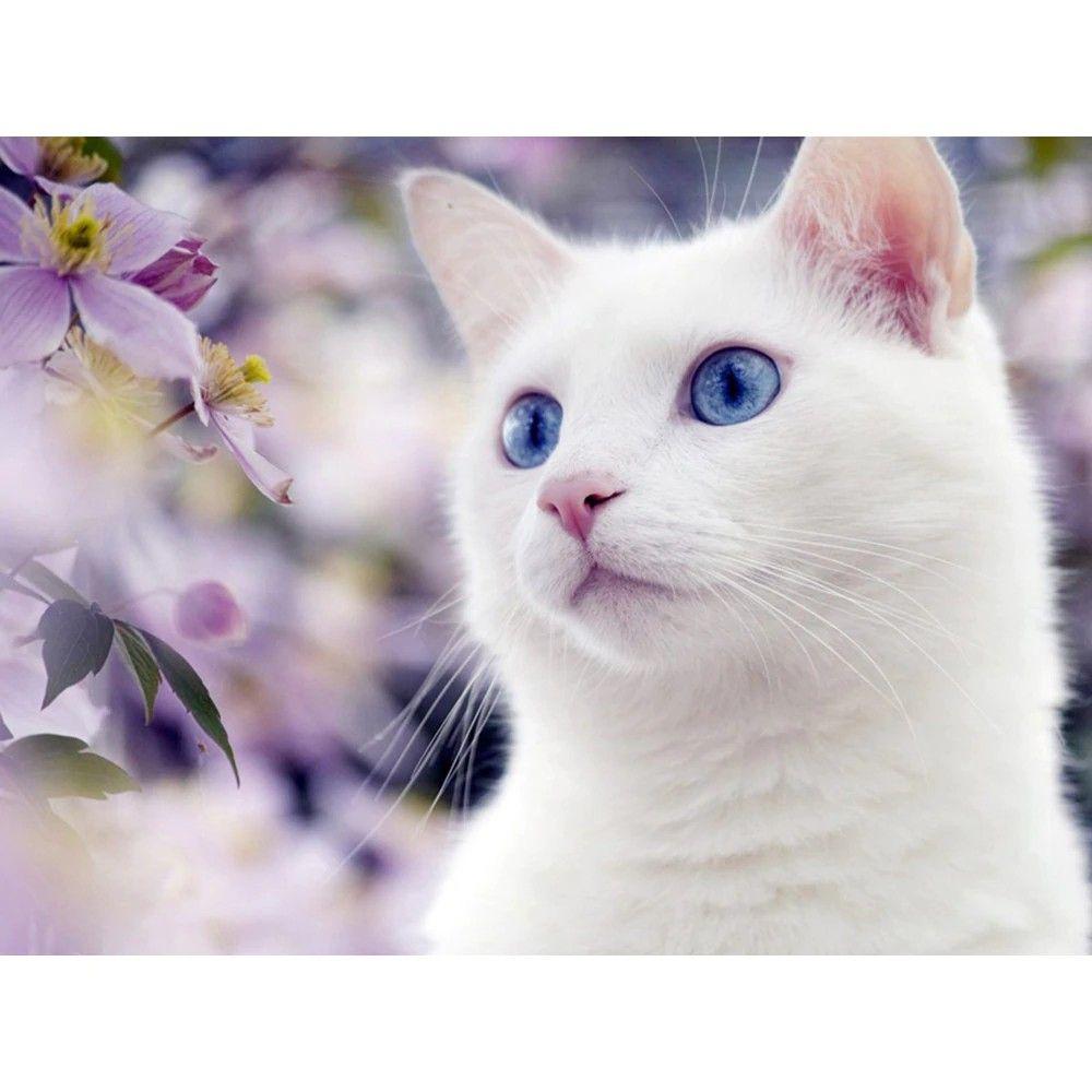 5d Diy White Cat Diamond Painting Diabroidery In 2020 White Cat Diamond Painting Blue Cats