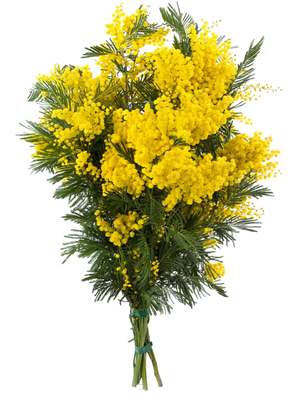 Tube Bouquet Of Mimosa Flowers Flowers Everywhere Pinterest