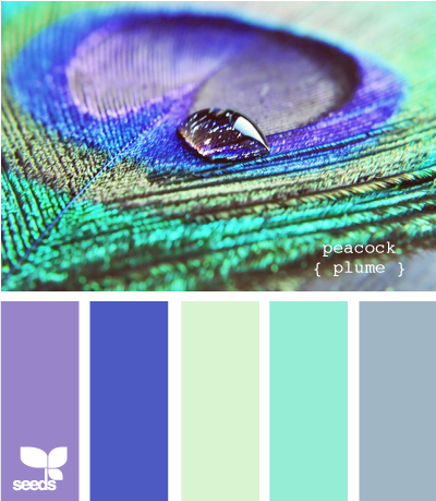 Peacock Plume For The Home Pinterest Design Seeds Color