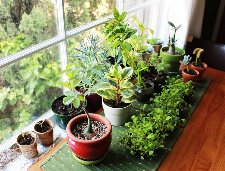 5 Reasons to Have a Plant at Your Desk | Office plants, Bamboo leaves and  Desks