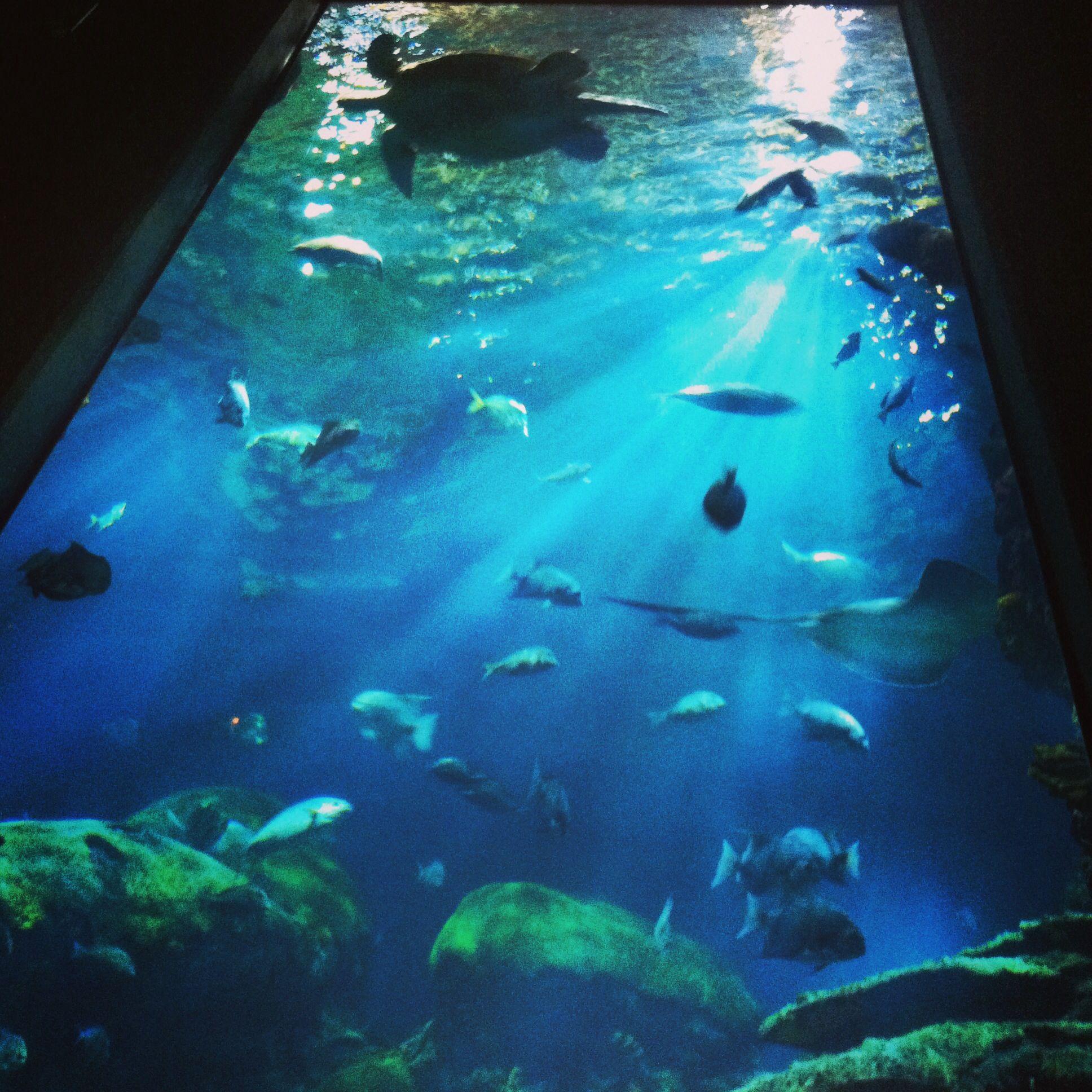 Tennessee Aquarium, Chattanooga Tenn   Tennessee aquarium ...