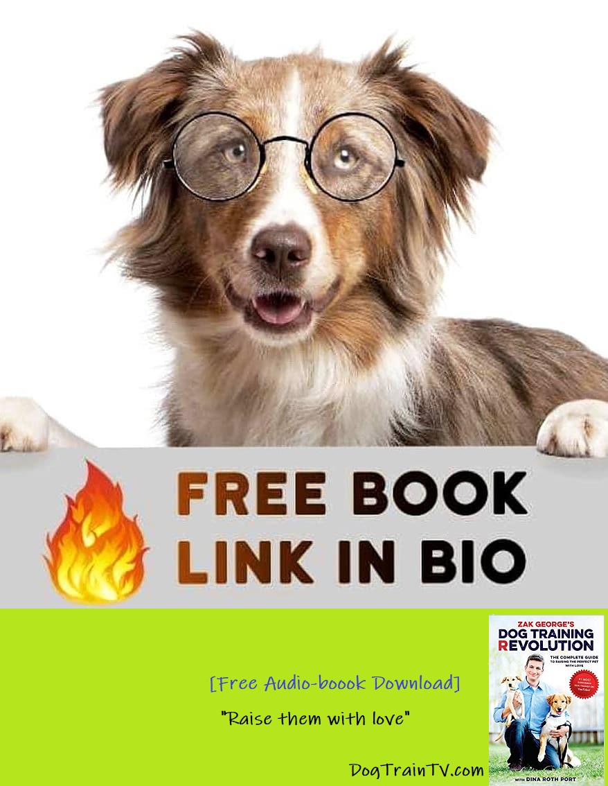 Free eBook Check the link in my Bio Follow us dogbrain