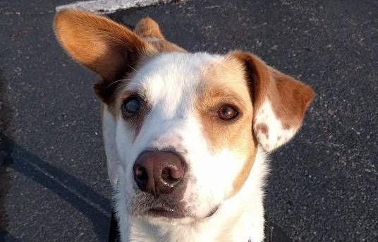 Pin On Fabulous Dog Ears Adoptable