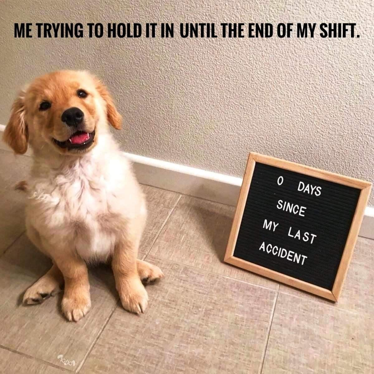 Dog Supplies Store For Treats Care And Accessories For Your Pet Dogs Funny Dog Memes Cute Dog Memes Dog Memes