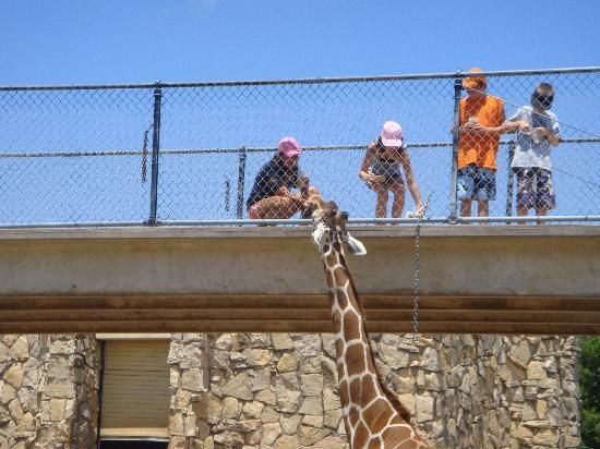 City Of Abilene Texas Information And Stats Abilene Texas Abilene Zoo Abilene