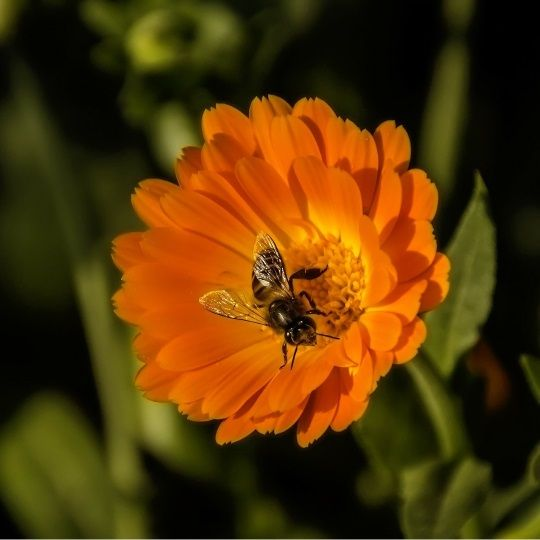 5 Ways To Make Your Garden More Friendly To Bees - http://www.gardenpicsandtips.com/5-ways-to-make-your-garden-more-friendly-to-bees/