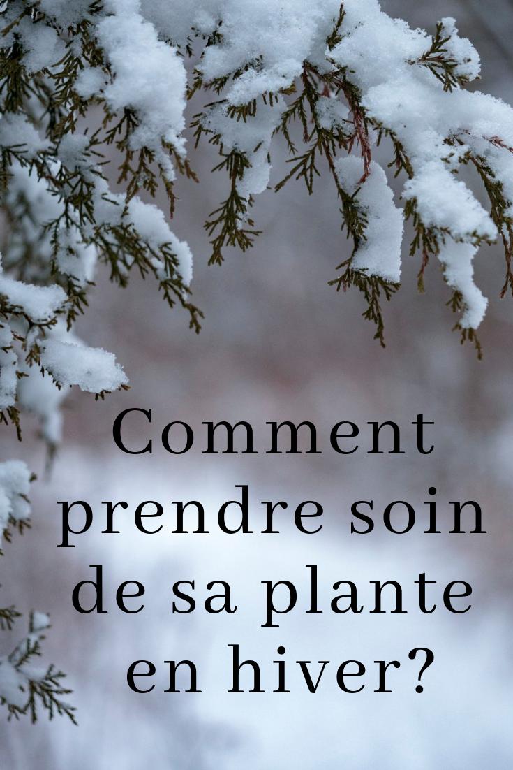Guide D Entretien De Plantes D Interieur Pour L Hiver Plante