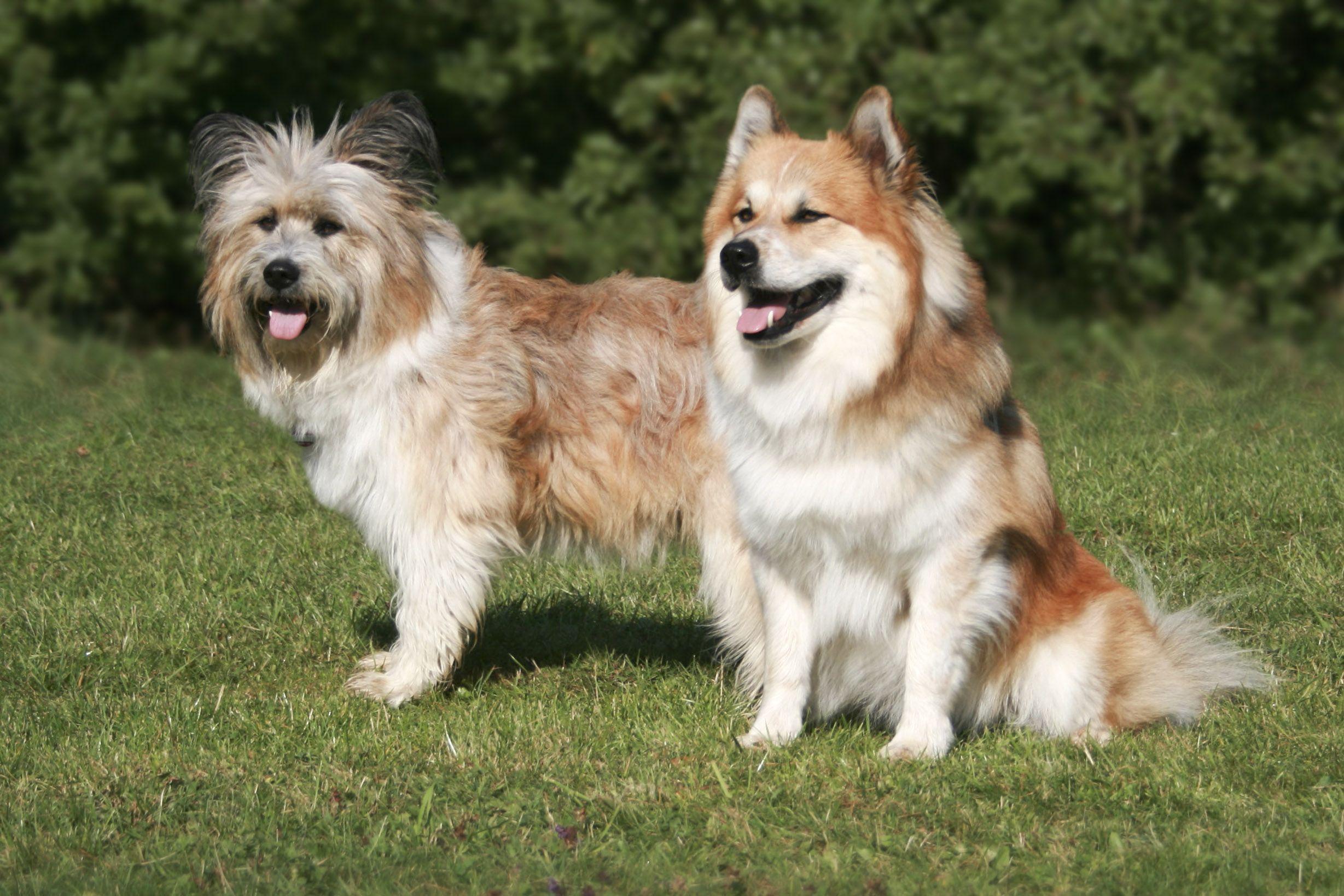 Pin Auf Hund Elo