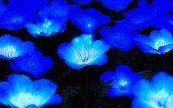 WALLPAPERS HD: Glowing Blue flowers#blue #flowers #glowing #wallpapers #blueflowerwallpaper