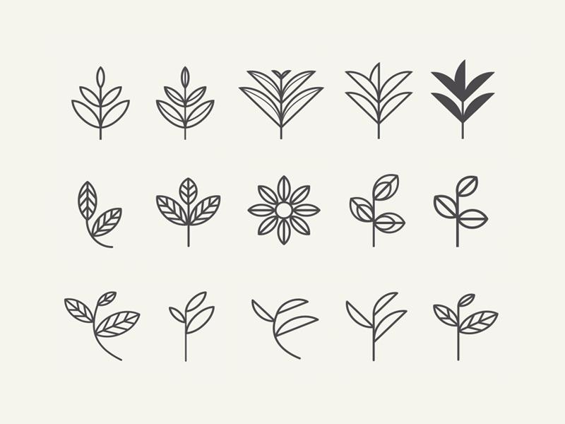 Leaf Exploration Tea Logo Leaves Sketch Leaf Tattoos